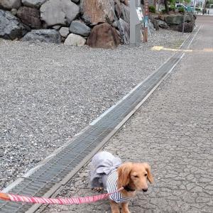 マニアではありません~琵琶湖の旅③~