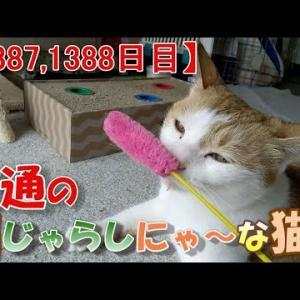 赤ちゃんに優しい猫の話(我が家のネコ(ニケ)の成長記録:1387,1388日目)