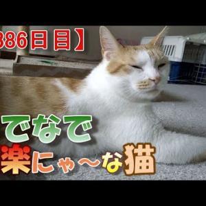 猫にウェットフードを食べさせる話(我が家のネコ(ニケ)の成長記録:1386日目)