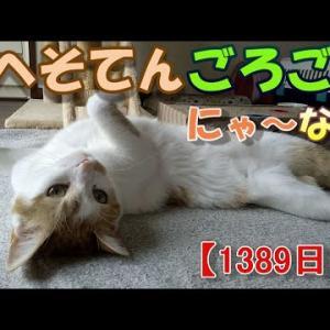 疲れやすい猫の話(我が家のネコ(ニケ)の成長記録:1389日目)