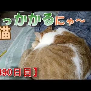 猫との結婚の話(我が家のネコ(ニケ)の成長記録:1390日目)