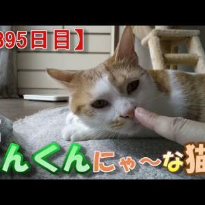 猫に人差し指を差し出すやり方の話(我が家のネコ(ニケ)の成長記録:1395日目)