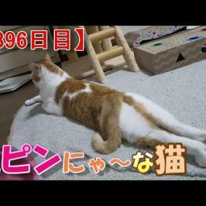 人間っぽい猫の話(我が家のネコ(ニケ)の成長記録:1396日目)