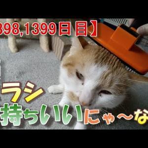 猫のブラシの話(我が家のネコ(ニケ)の成長記録:1398,1399日目)