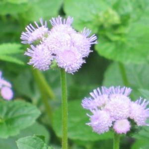 ちょっと紫色の~(2)
