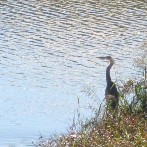 鳥たちのいる川
