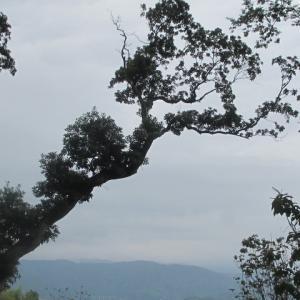 お気に入りの枝ぶり(山頂からの眺め)