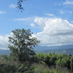 空と雲と木々 3