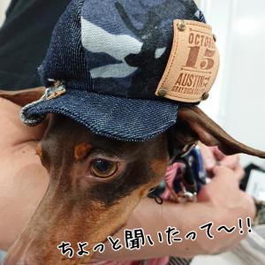 ミニピン秋冬コレクション2019 (…とmamaの呟き?)
