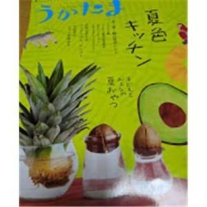 パイナップルとアボガドの種で栽培の実験を開始