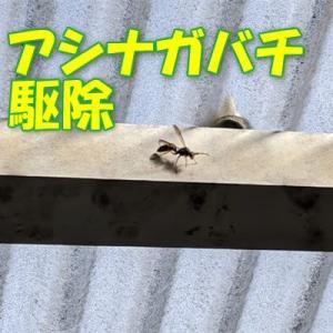 ベランダの古い箱の蓋を開けたらハチが飛んで出てきた。