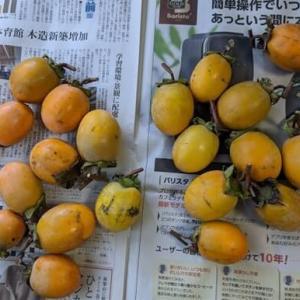 柿酢の仕込みと吊し柿つくり