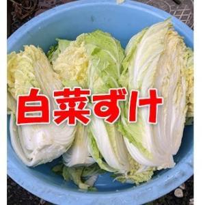 昔ながらの白菜の漬物と大根の漬物の途中経過