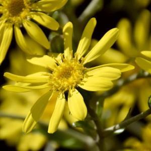 秋の庭の花