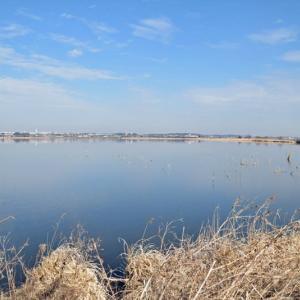 暖かな冬の手賀沼