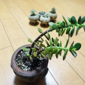 在宅な日々⑬(植物)