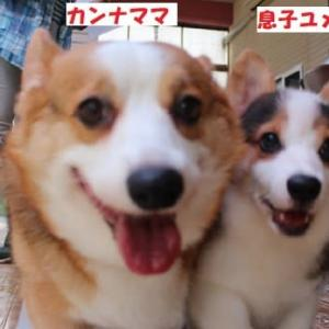 カンナ&ゆめクンを迎えに九州へ。