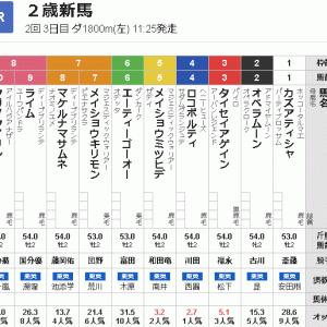 【一口馬主】2歳世代初陣、ロコポルティくんは4枠4番より出撃!