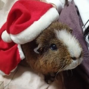 クリスマスイブ!!