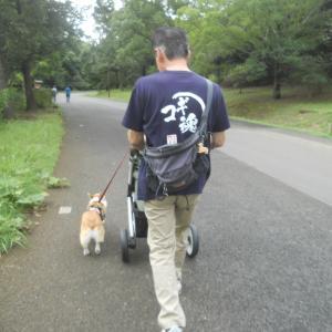 半年ぶりの昭和記念公園