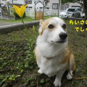 狭山公園にお散歩