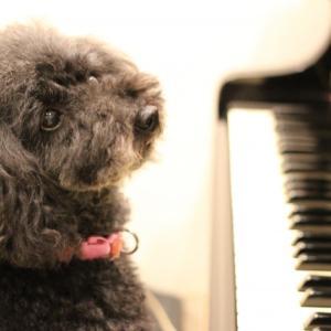 動物も音楽に癒されます