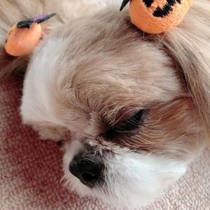 ✨可愛い 寝顔 ❤️ 秋のキャンペーン中☆ドクトルブランシェ✨