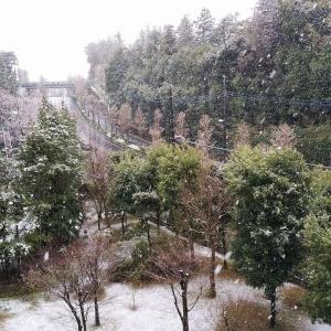 季節外れ?の雪と、日本型BCG