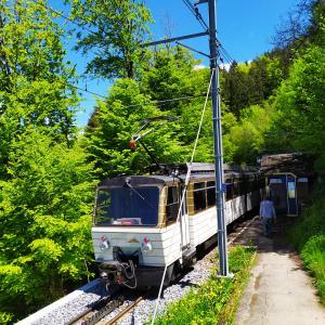 ナルシス(水仙)の道~スイス、モントルー近郊