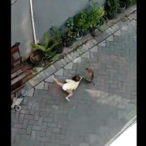 子猿が幼児を誘拐しようとするショッキングな動画は本物なのか?
