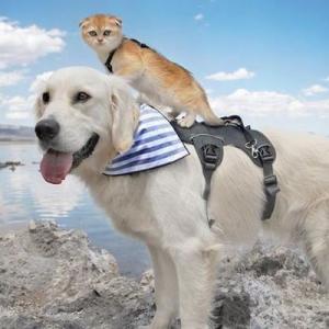 いつも子猫を背中にのせてあげるワンコ、2匹の仲良しぶりに思わずなごむ
