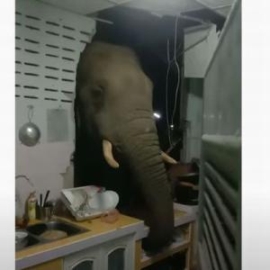 「食べ物はありませんか?」タイでゾウがキッチンの壁を突き破る【動画】
