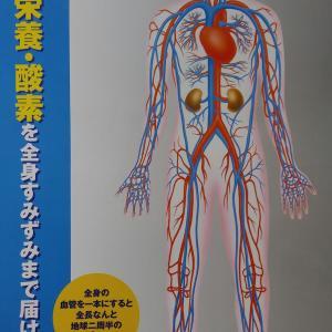 冷え性の改善は血流(栄養・酸素・熱の運搬)の改善でのみ可能という真実