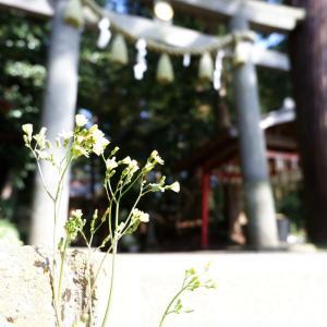 最近人気急上昇なミステリースポット、麻賀多神社