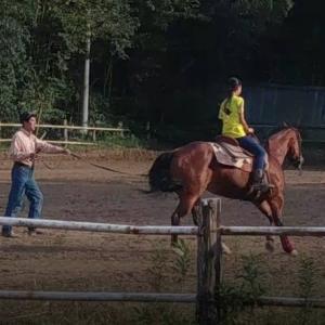 始めての乗馬で駈歩!(151&152鞍目)
