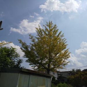 暑いけど秋
