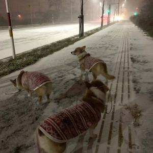 とうとう本格的な冬が・・・3匹!大喜び