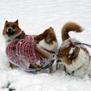 初雪を楽しめたサラダたち