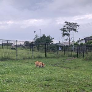 前田森林公園も山口緑地も雨!どうする?