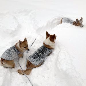 雪が降った! 楽しい冬の始まり。