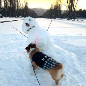 寒くても、散歩は別!