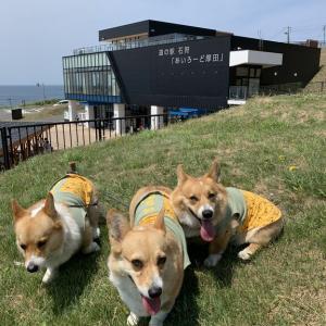日本海を見ながらドライブ