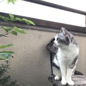 黒白猫ちゃん