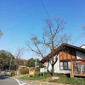 【豊田市おでかけ】緑化センター昭和の森でBBQ♪