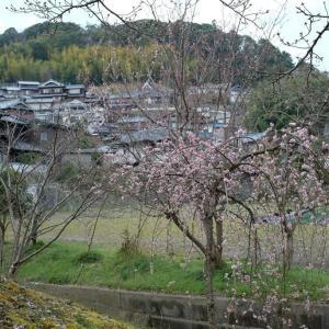 神戸北区/あいな里山公園散策