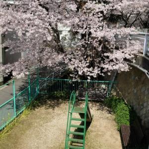 菊水山にも春