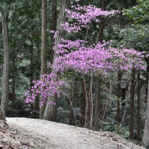 菊水山、初本番