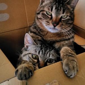 猫から学ぶ・「安全」の大切さ