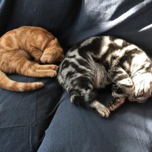 床暖は本っ当~につけて良かったとネコに感謝される