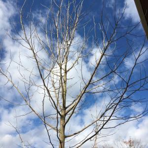 【外構】シンボルツリー、はやくも植え替え